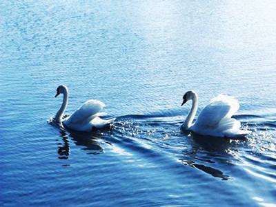 巴音布鲁克天鹅湖2.jpg