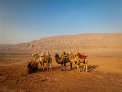 火焰山两骆驼800600.jpg