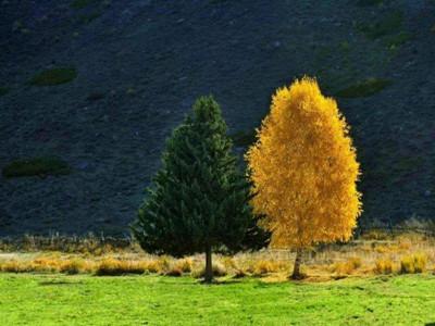可可托海景区夫妻树w800600.jpg